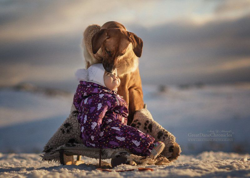 родезийский риджбек, риджбек, собака, ребенок, зима, няня Моя заботливая родезийская няняphoto preview