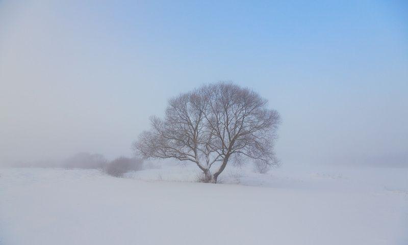В зимнем туманеphoto preview