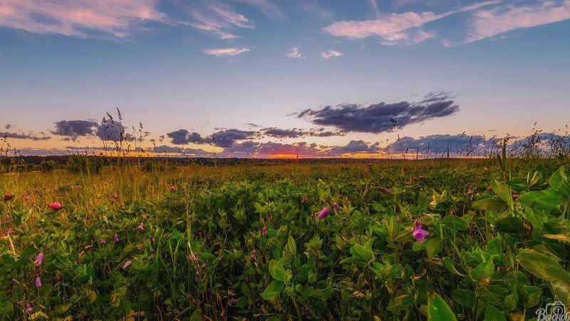 жостово,подмосковье,московская область,закат,поле, На закате солнечного дняphoto preview
