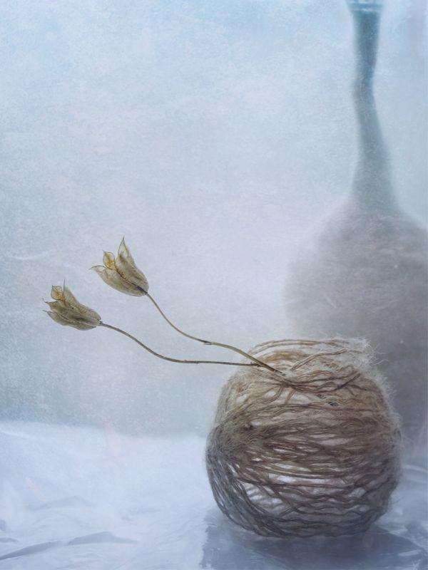 растение, природа, нитки,бутылка, натюрморт photo preview