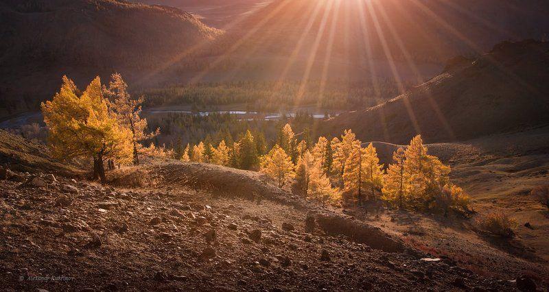 алтай, осень, пейзаж Алтайская осень...photo preview