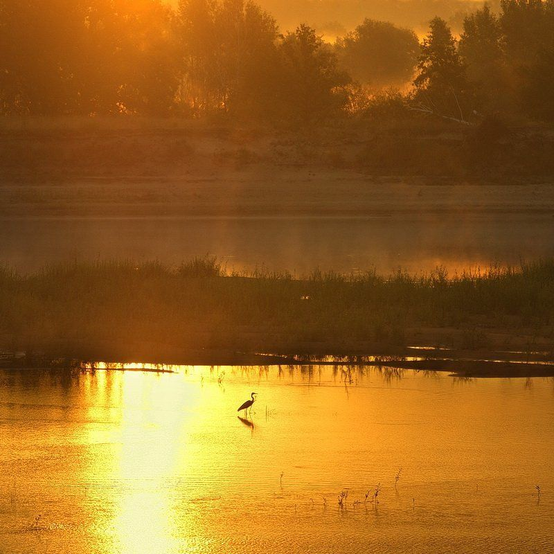 morning, summer, river, heron, shoal, sandbank, mist, belarus, nature, landscape, летнее утро, туман, река, отмель, цапля, птица, природа, лето, беларусь Про летнее утроphoto preview