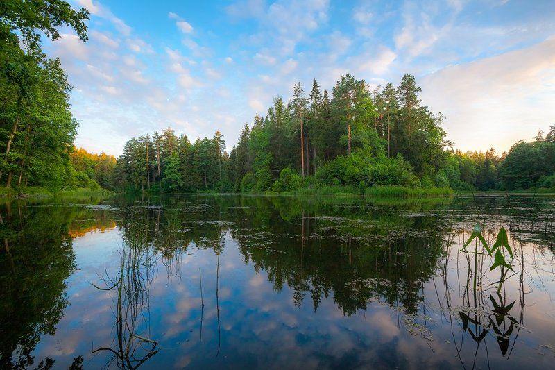 озеро, лес, дубровенка, печерск, вечер, благодать Любимое местоphoto preview