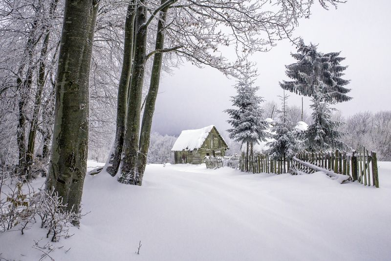 winter,snow,house,trees,frozen,fence, Feel the silencephoto preview