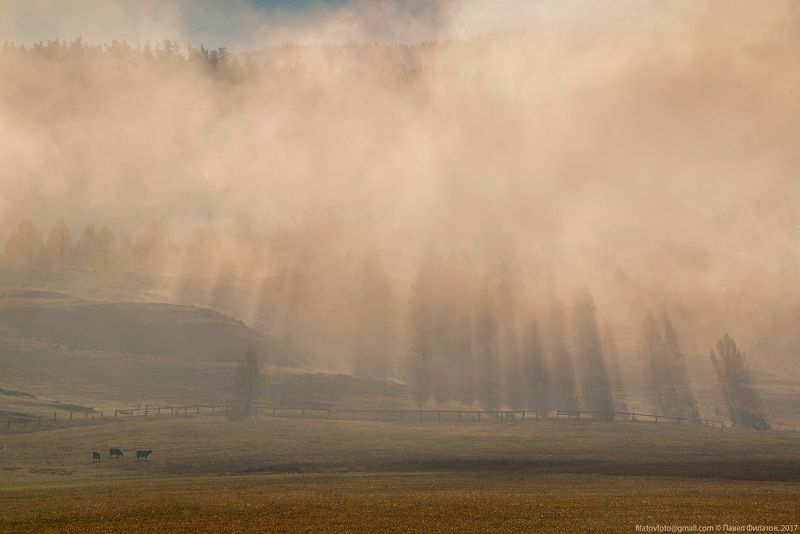 #алтай_чудеса_природы #алтай #сибирь #siberia #павел_филатов #pavel_filatov #filatovpavelaltai #пастбища #коровы #усть_кан #туман #утро #рассвет #осень #fog #morning #sunrise #rays #fall В стране тумановphoto preview