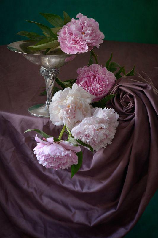 Классический, цветочный, натюрморт, пышный, букет, пион, оттенки, розовый, цвет, старинный, металлический, ваза, свернутый,  драпировка, естественный, освещение, начало лета Розовые пионы на драпировкеphoto preview