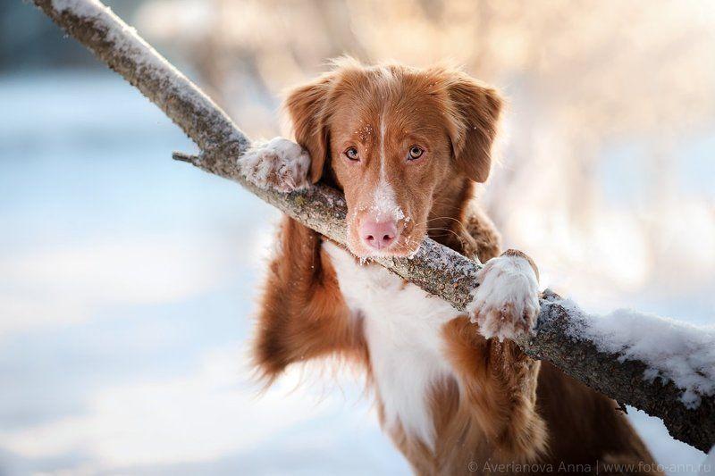 зима, природа, собака, солнце портретphoto preview