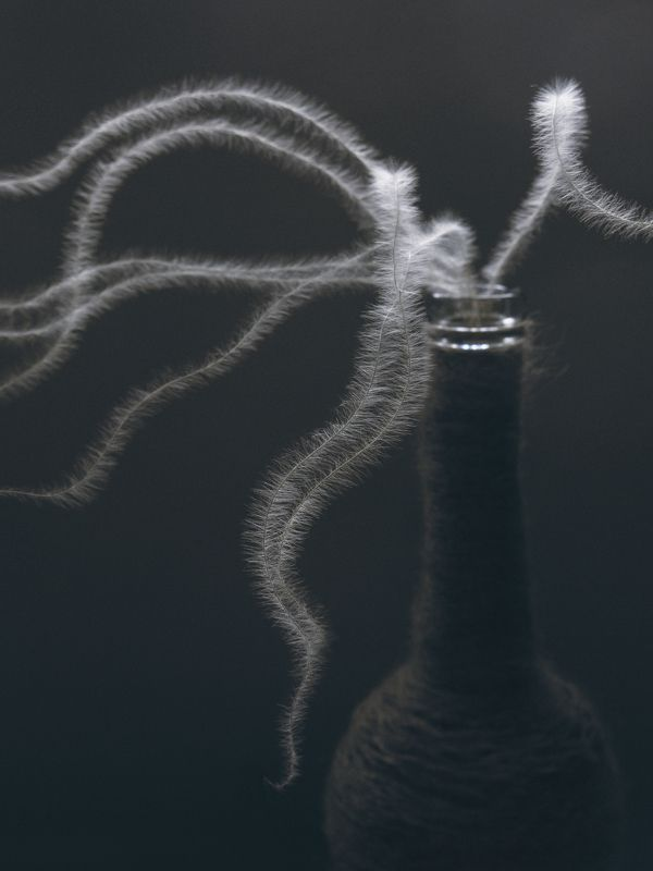 ковыль, растение, природа,легкость, бутылка, нитки, свет, натюрморт, минимализм photo preview