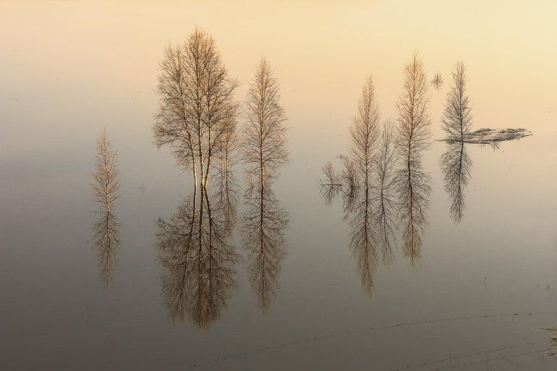 вечер, весна, разлив, вода, половодье, деревья, кусты, река, уйма, архангельск Разливphoto preview