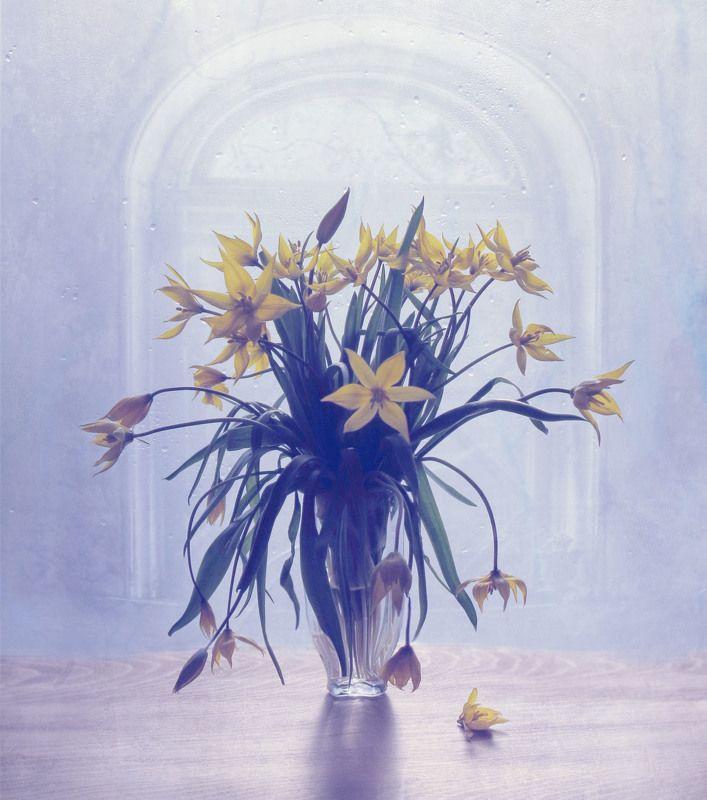 апрель, цветы, растение, природа, букет, ваза, окно, желтый, весна, натюрморт цветочкиphoto preview