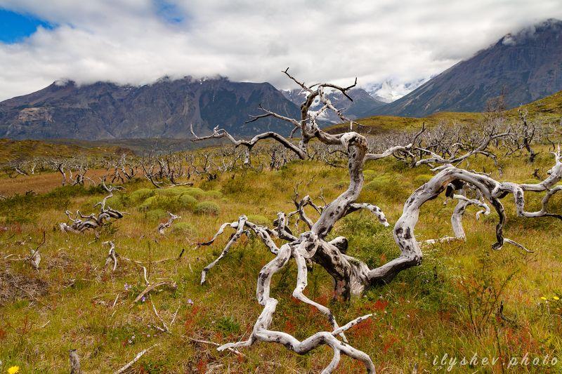пейзаж, природа, путешествие, патагония, чили, южная америка, лес, горы, облака Сгоревший лесphoto preview
