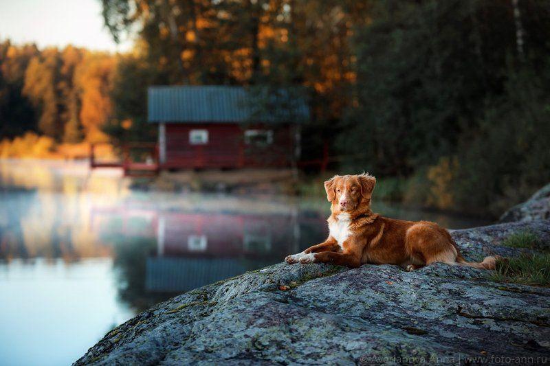 собака, природа, рассвет на рассветеphoto preview
