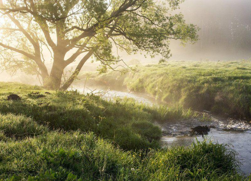 Весенний свет...photo preview