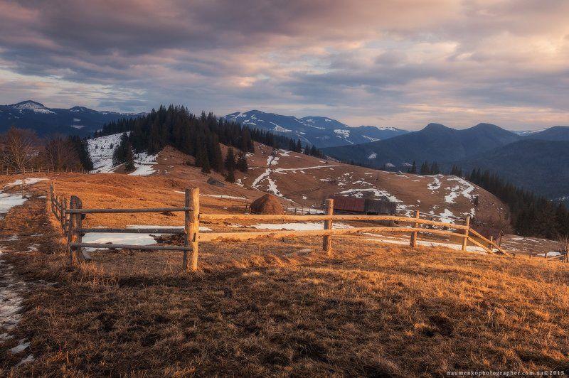 карпаты, украина, зима, пейзаж, снег, карпатский, гора, красивый, небо, природа, дерево, холод, мороз, путешествия, белый, сезон, ель, лес, фон, снежный, горы, зимний, утро, отдых, солнце, лед, изморозь, иней, сцена, синий, свет, замороженный Карпаты. Дземброня. Зимний вечер у полонины Степанскийphoto preview