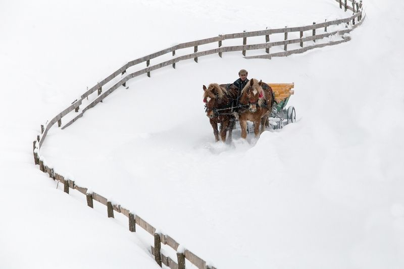 winter,snow,fence,horse,white, Long way to homephoto preview