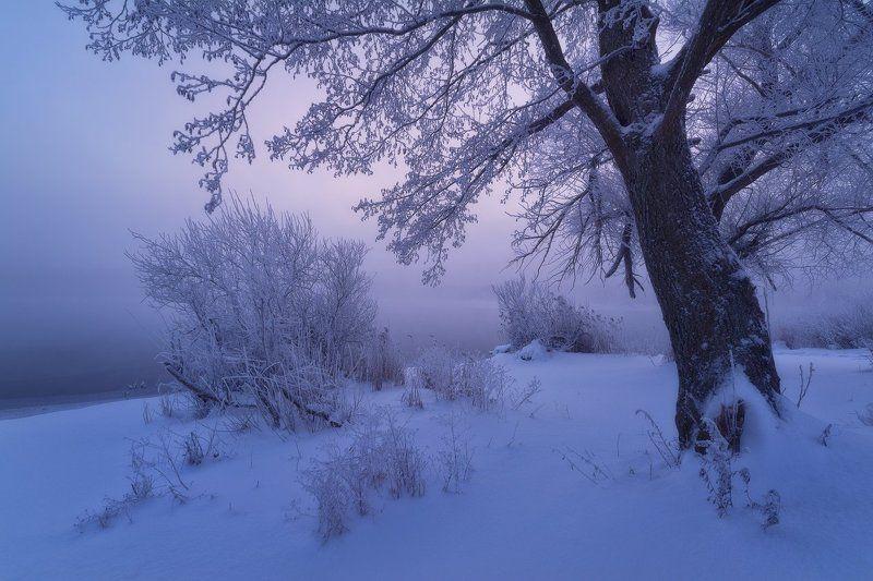 пейзаж, зима, зимнее фото, иней, мороз, туман, утро, рассвет, пейзажная фотография, шатура, озеро, никон, сигма, фототуры выходного дня Морозная тишинаphoto preview