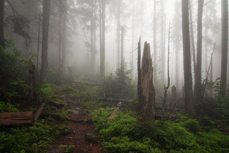 Туманными тропамиphoto preview