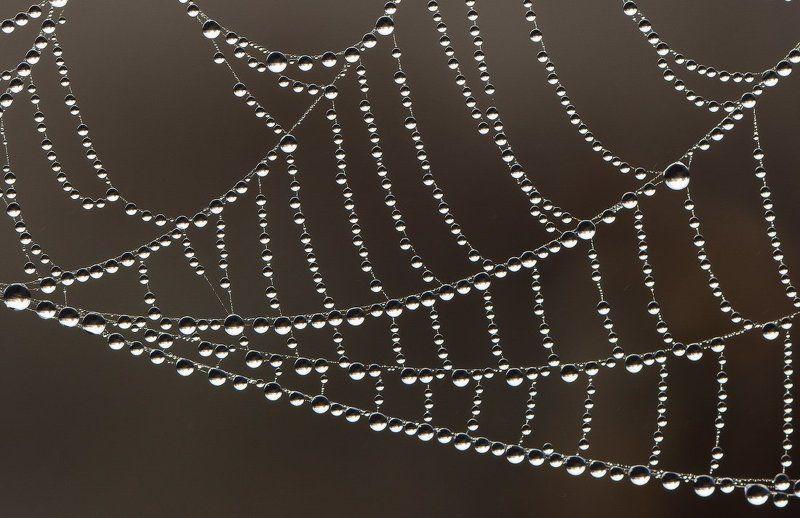 паутина,паук,макро,роса Жемчужная сетьphoto preview