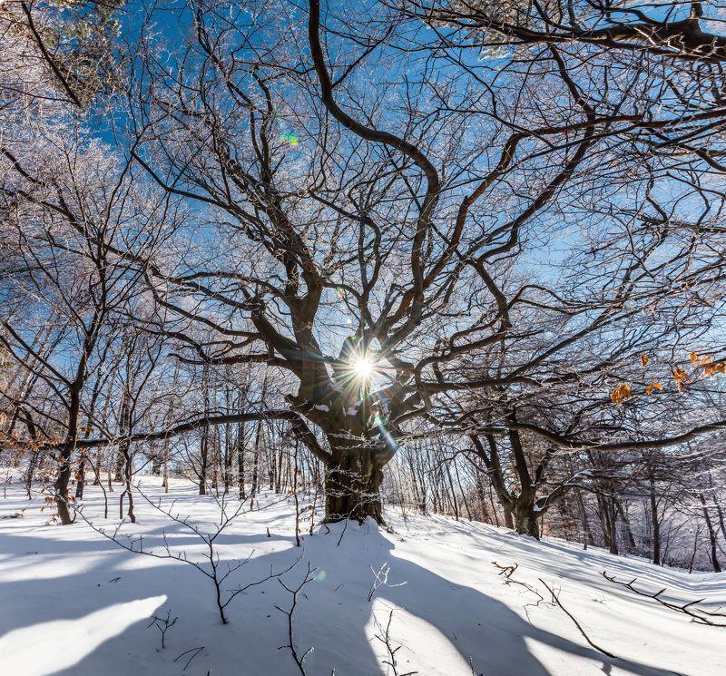 tree, winter, snow, forest, sun, sunstar, landscape, nature Sunny treephoto preview