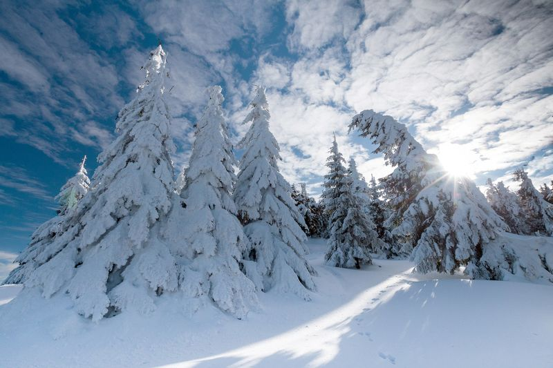 winter,trees,sgy,colors,snow,frozen, Rise upphoto preview