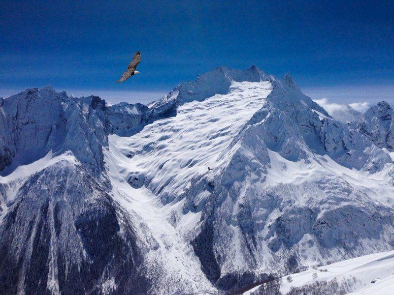 кавказ, горы, сип, белоголовый Горный этюдphoto preview