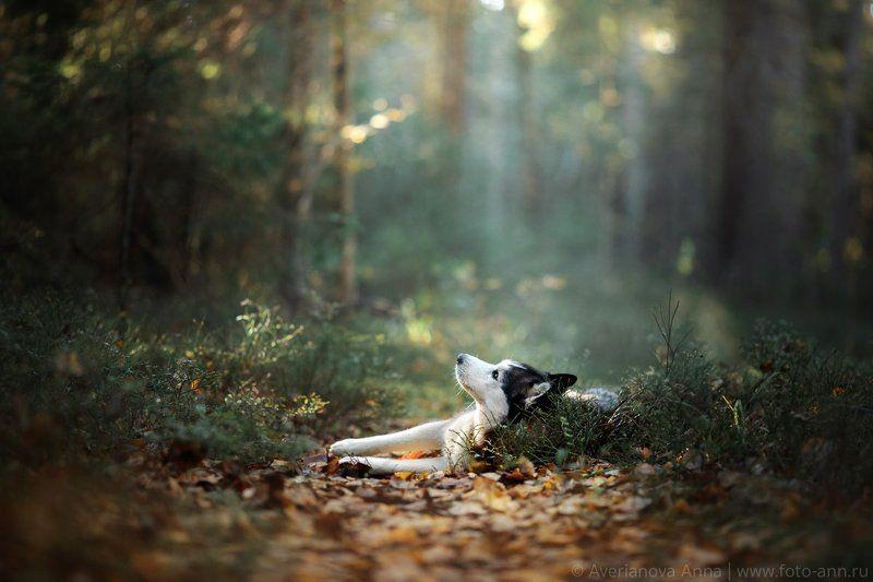 собака, природа, лес В лесуphoto preview
