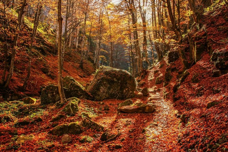 forest, bulgaria, rocks, autumn, teteven, waterfalls Welcome to Narniaphoto preview