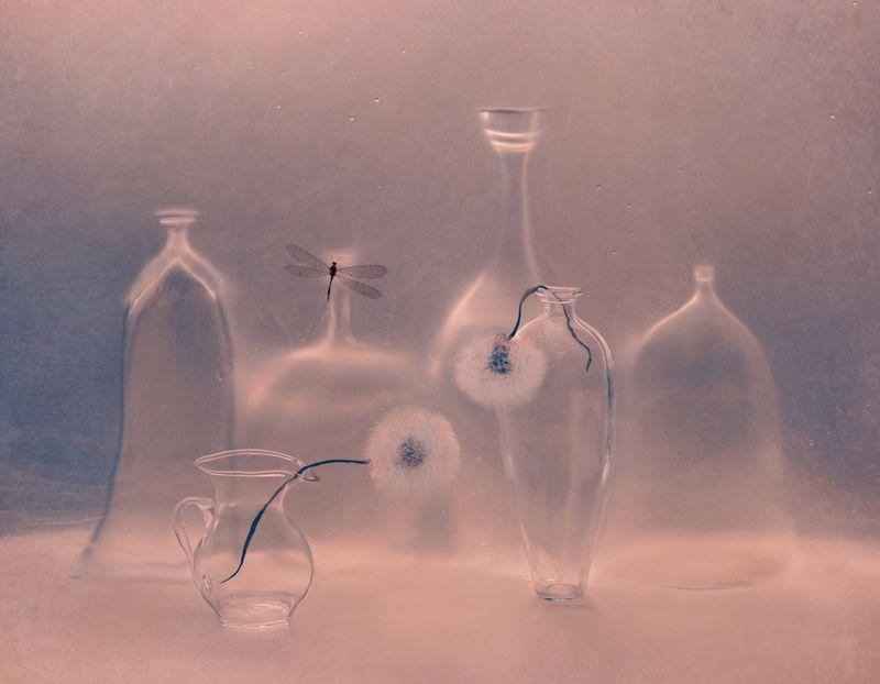 одуванчики, бутылки, кувшин, полиэтилен, натюрморт, арт, растение, природа photo preview
