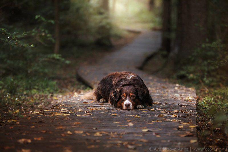 собака, лес, тропинка на тропинкеphoto preview