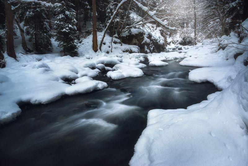 Зарисовка из зимнего лесаphoto preview