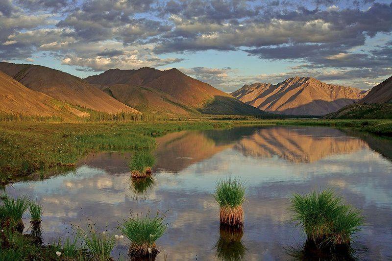 якутия, хребет черского, озеро дарпир Якутские ананасы.photo preview
