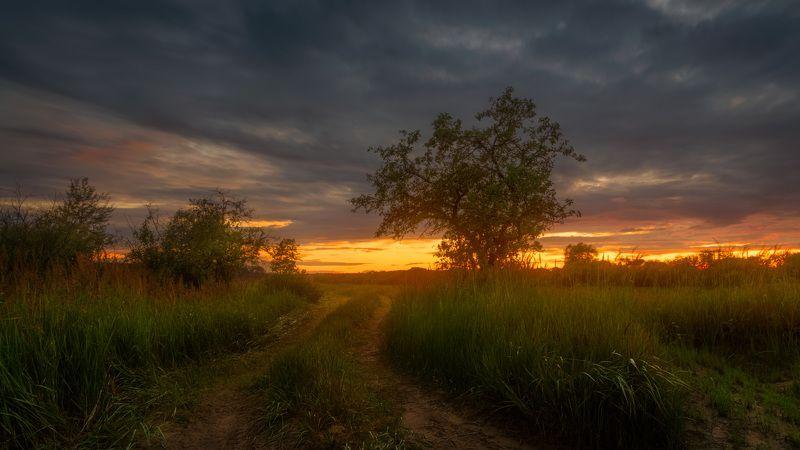 лето, закат, дикая яблоня, луг У дикой яблони на закате дняphoto preview