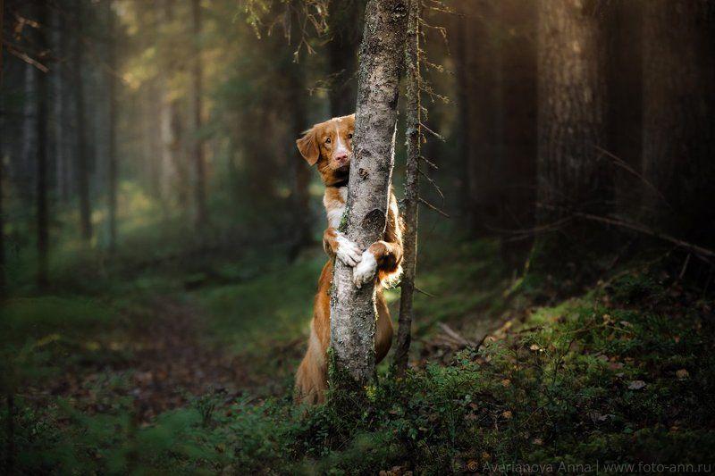 собака, лес, свет, природа наедине с природойphoto preview
