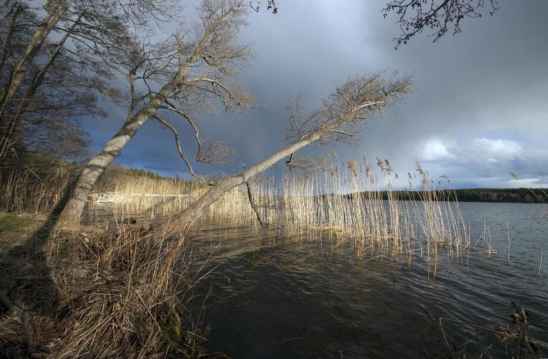 Почему деревья не летаютphoto preview