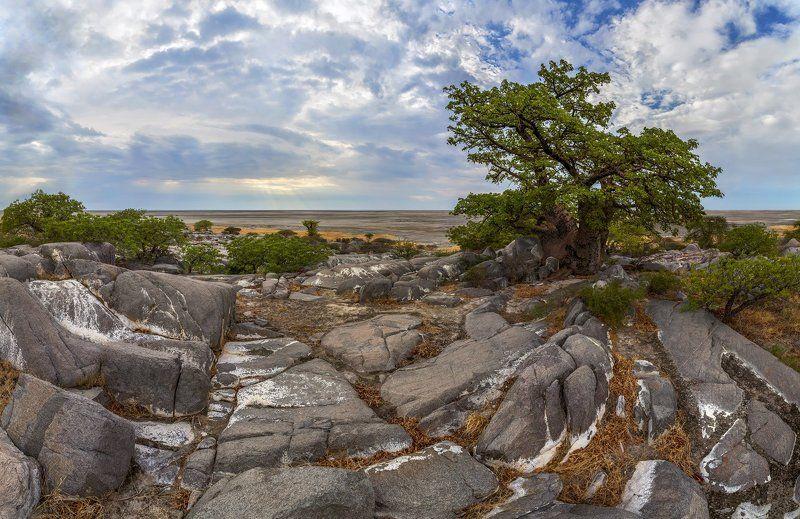 остров Кубу, Макгадикгади, Ботсвана, Африка, баобаб, солончак Остров Кубуphoto preview