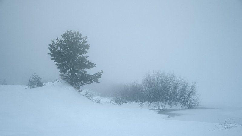 В холодном туманеphoto preview