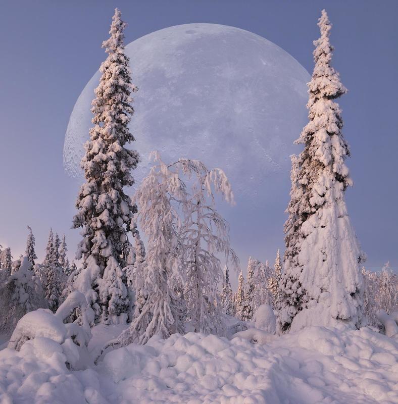 Cтражи зимыphoto preview