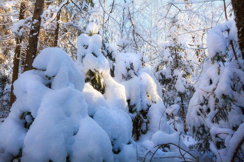 печерск, лес,могилев, беларусь По пояс в снегуphoto preview
