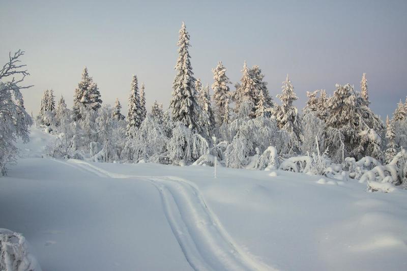 По снегу, по белому снегуphoto preview