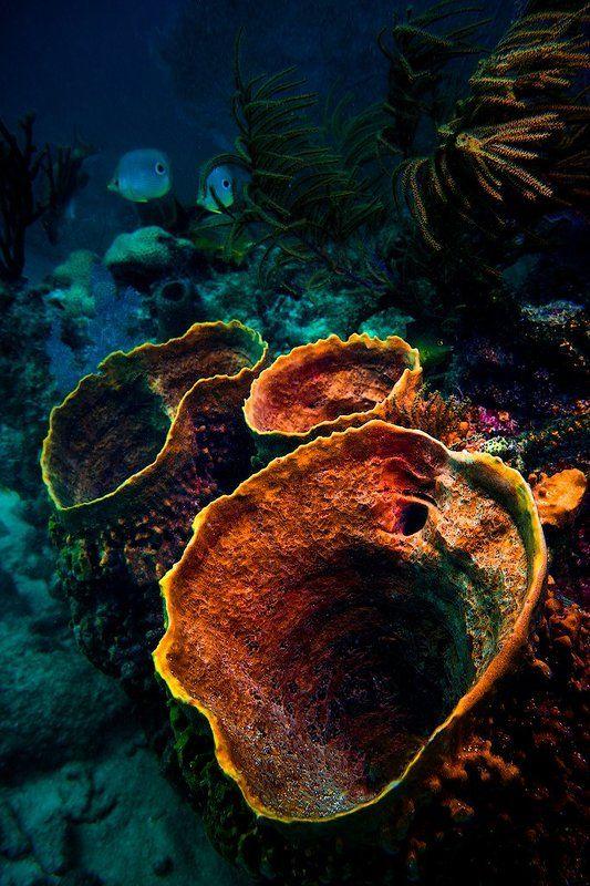 подводные вулканыphoto preview