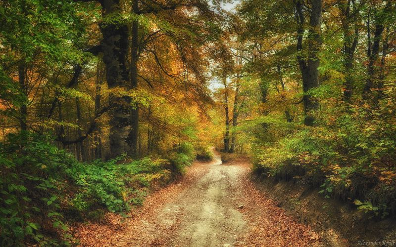 Осенний калейдоскоп...photo preview