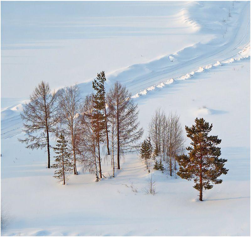 снег деревья дорога восход. \