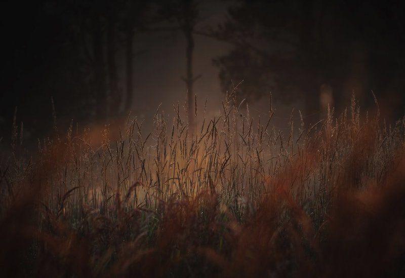 Где-то в лесу..photo preview