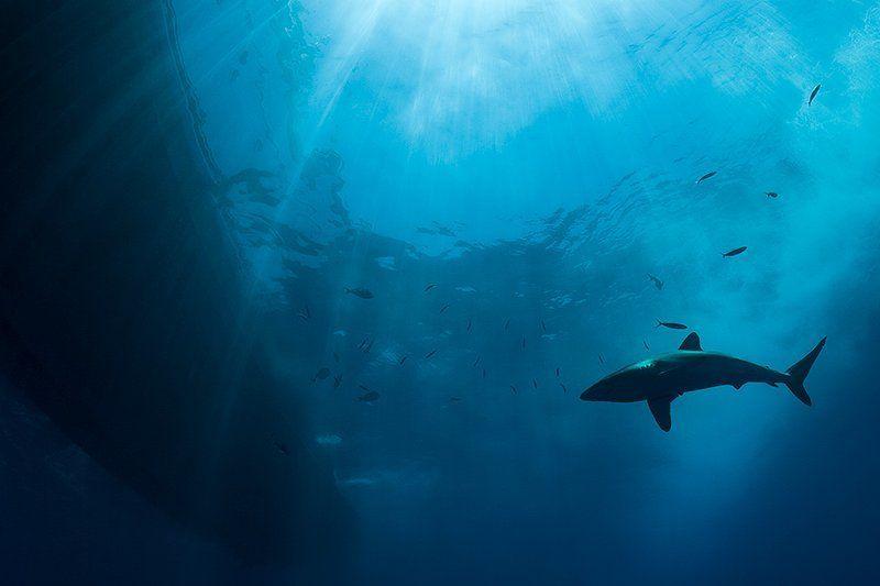 акула, солнце, вода, море, подводная съемка, свет светphoto preview