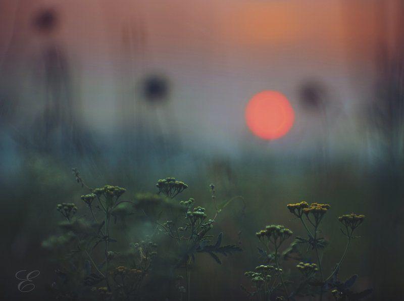 природа, красота, солнце, закат, трава, цветы, ожидание В ожиданииphoto preview