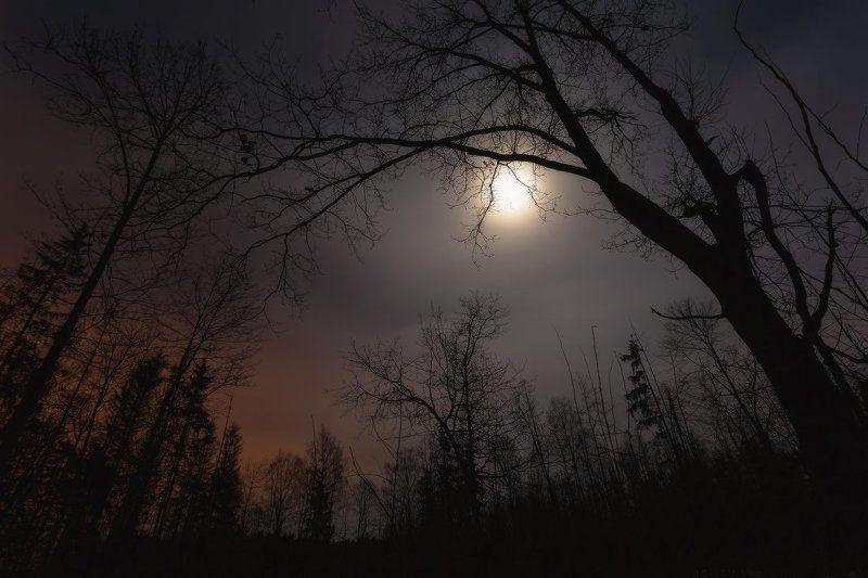 ночь,луна Alone in the Darkphoto preview