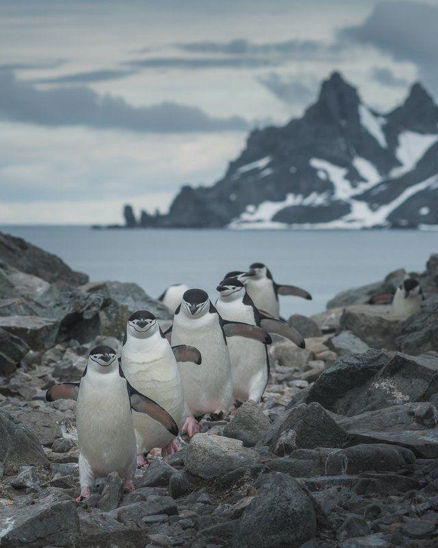 Антарктида Стройным шагом!photo preview