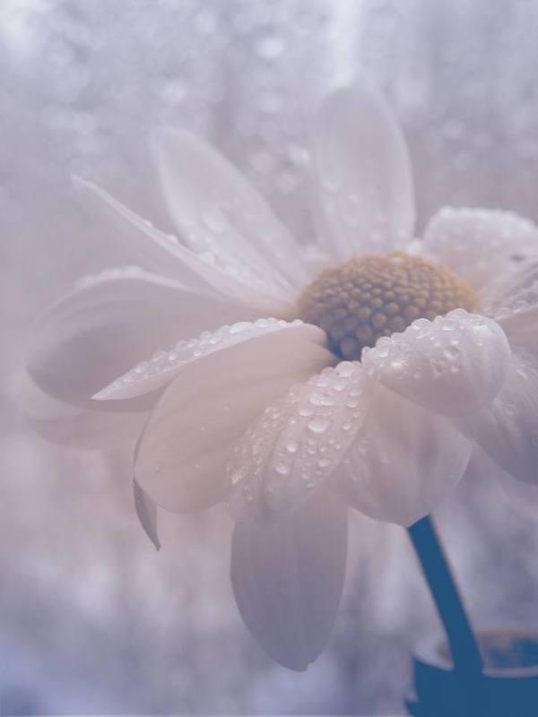 цветок, капли, светлый, природа капли нежности photo preview