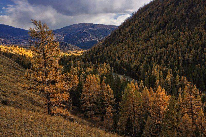алтай, горный алтай, долина коксу Осень в долине Коксуphoto preview