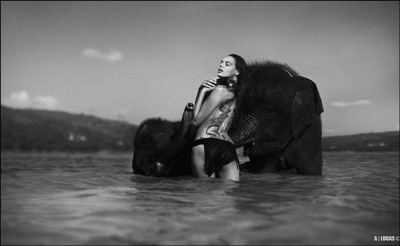 bone, elephant, © BONE ELEPHANT ©photo preview